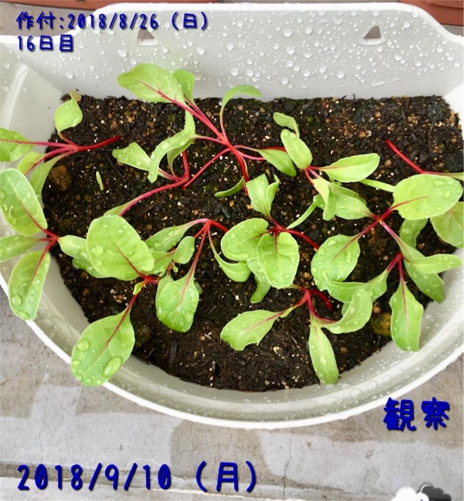 f:id:Mt_vegetable:20181217171648j:image