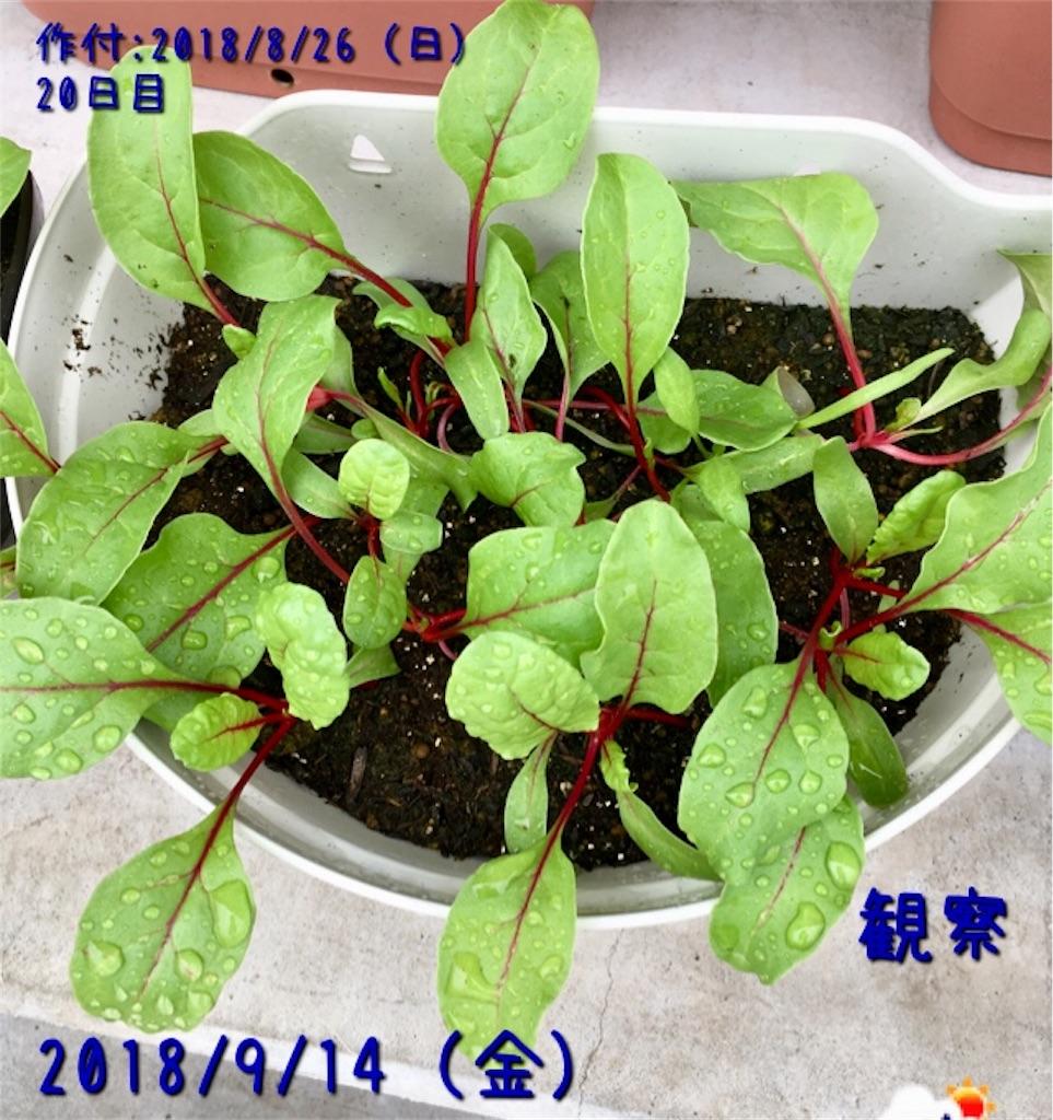 f:id:Mt_vegetable:20181217171700j:image
