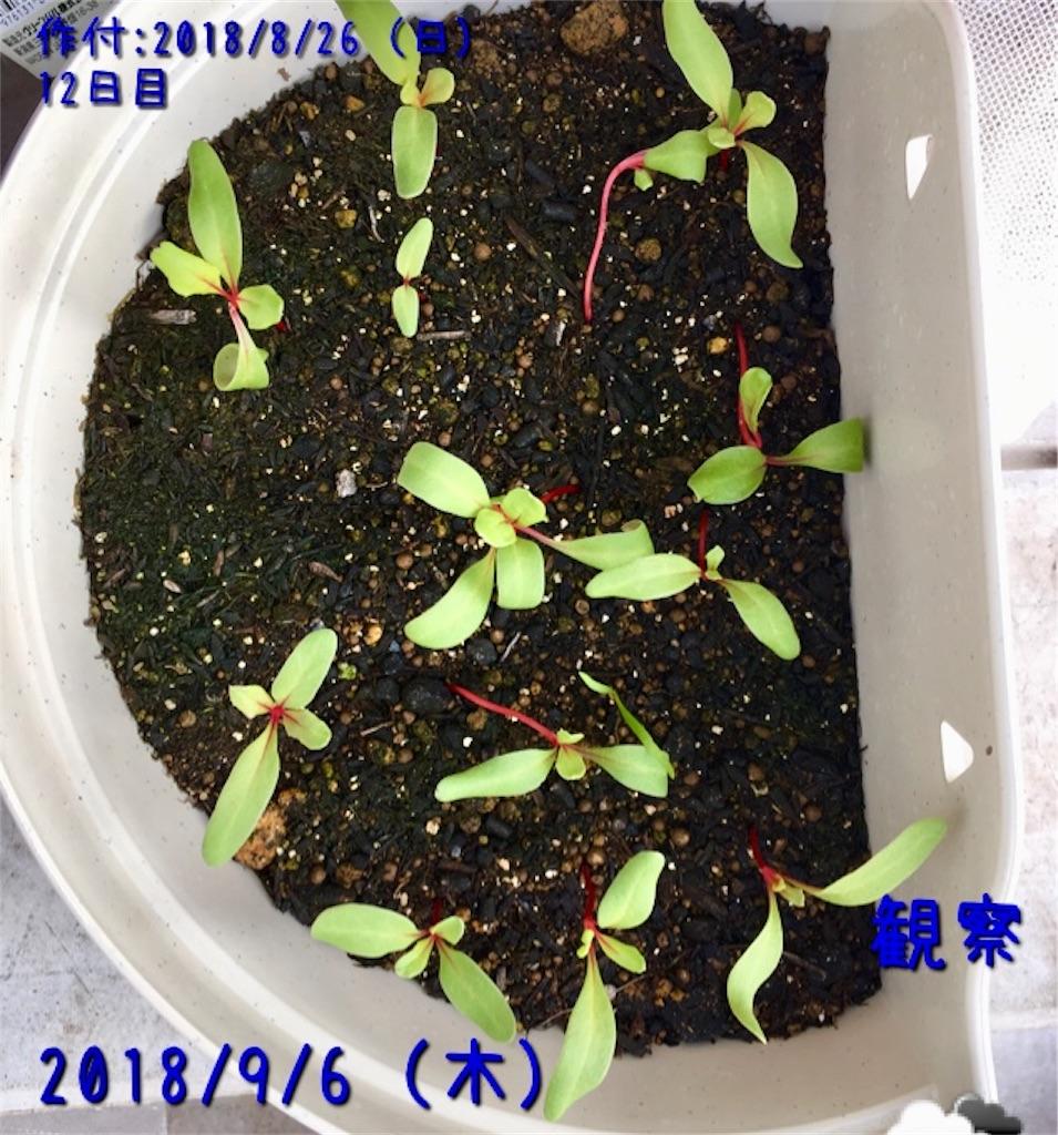 f:id:Mt_vegetable:20181217171711j:image
