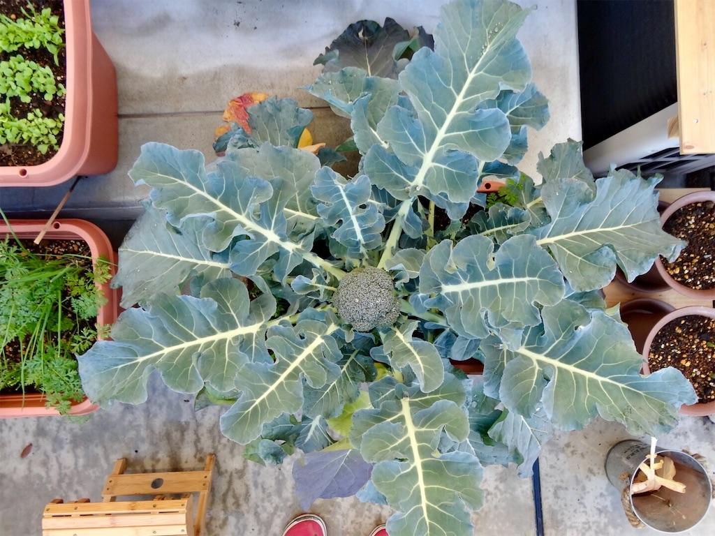 f:id:Mt_vegetable:20181218200223j:image