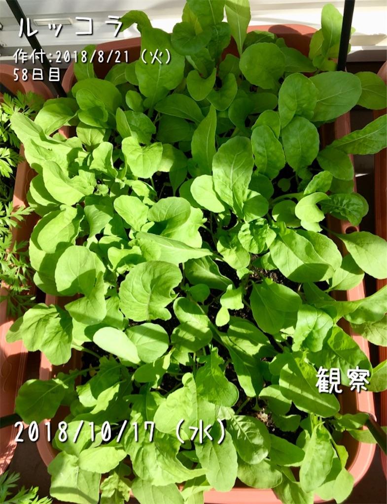 f:id:Mt_vegetable:20181219213844j:image