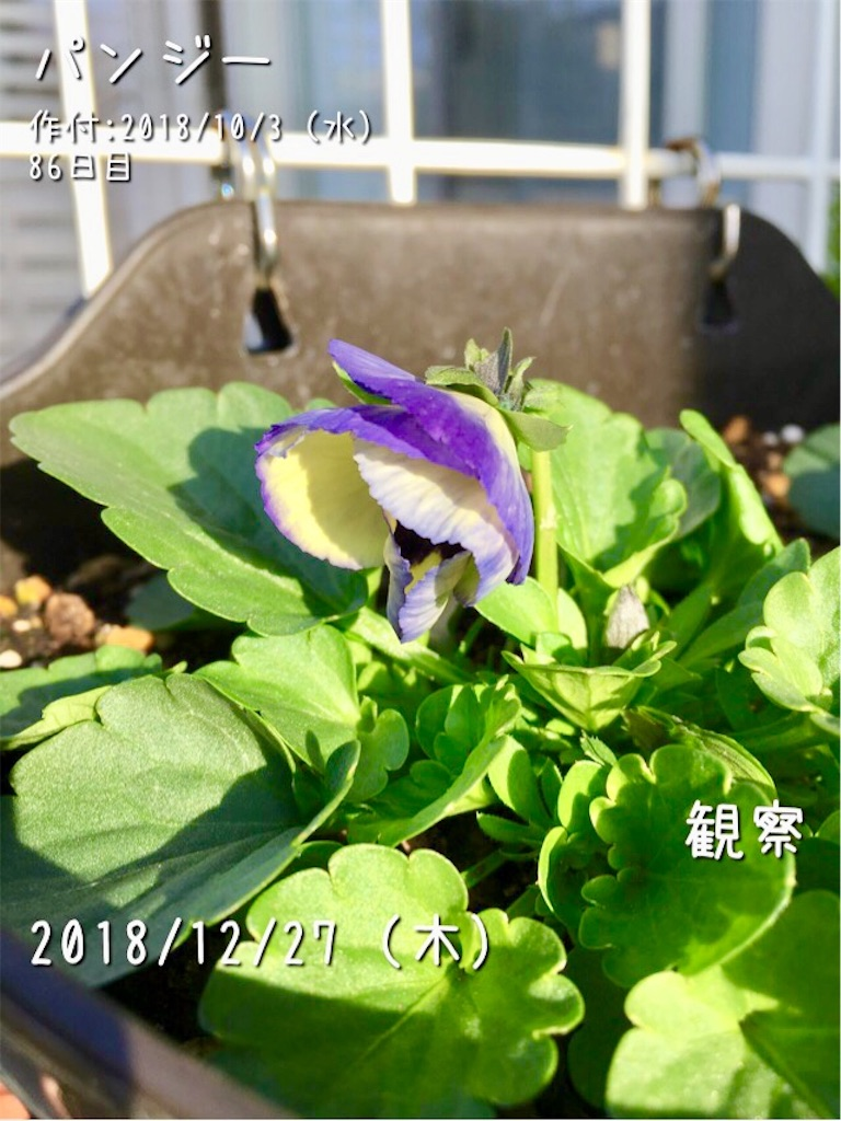 f:id:Mt_vegetable:20181227084639j:image