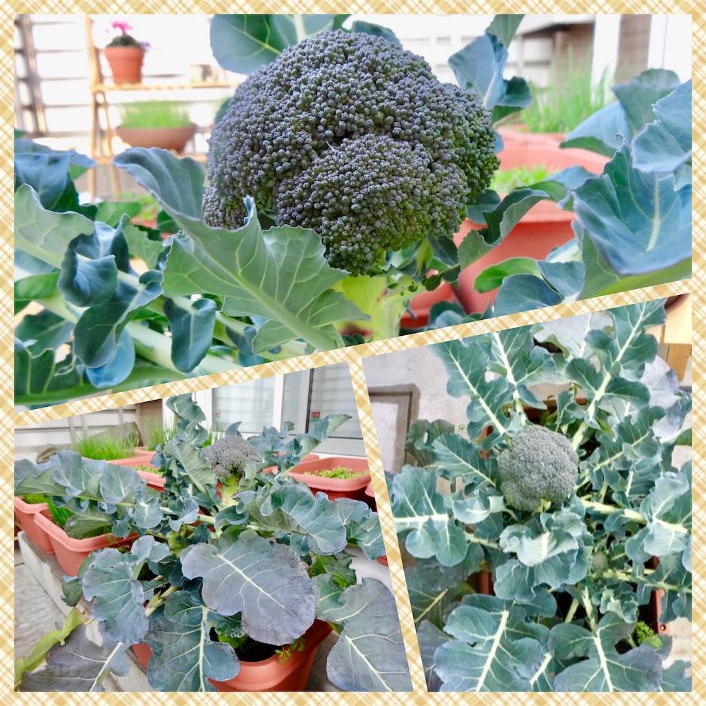 f:id:Mt_vegetable:20181227161945j:image