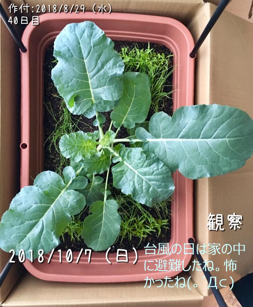f:id:Mt_vegetable:20181227164904p:plain
