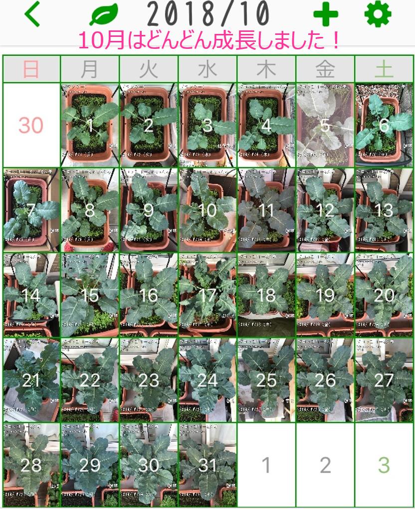 f:id:Mt_vegetable:20181227165241p:plain