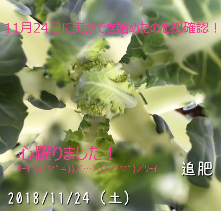 f:id:Mt_vegetable:20181227165917p:plain