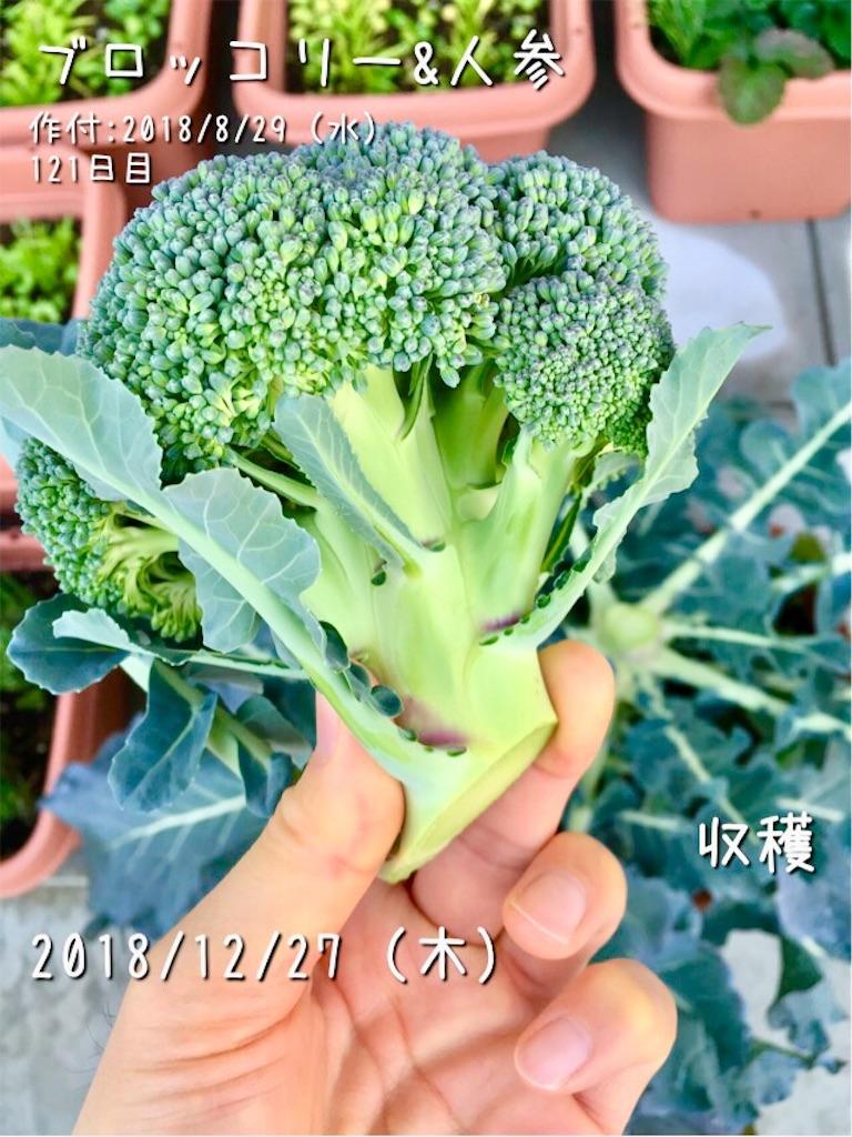 f:id:Mt_vegetable:20181227170206j:image