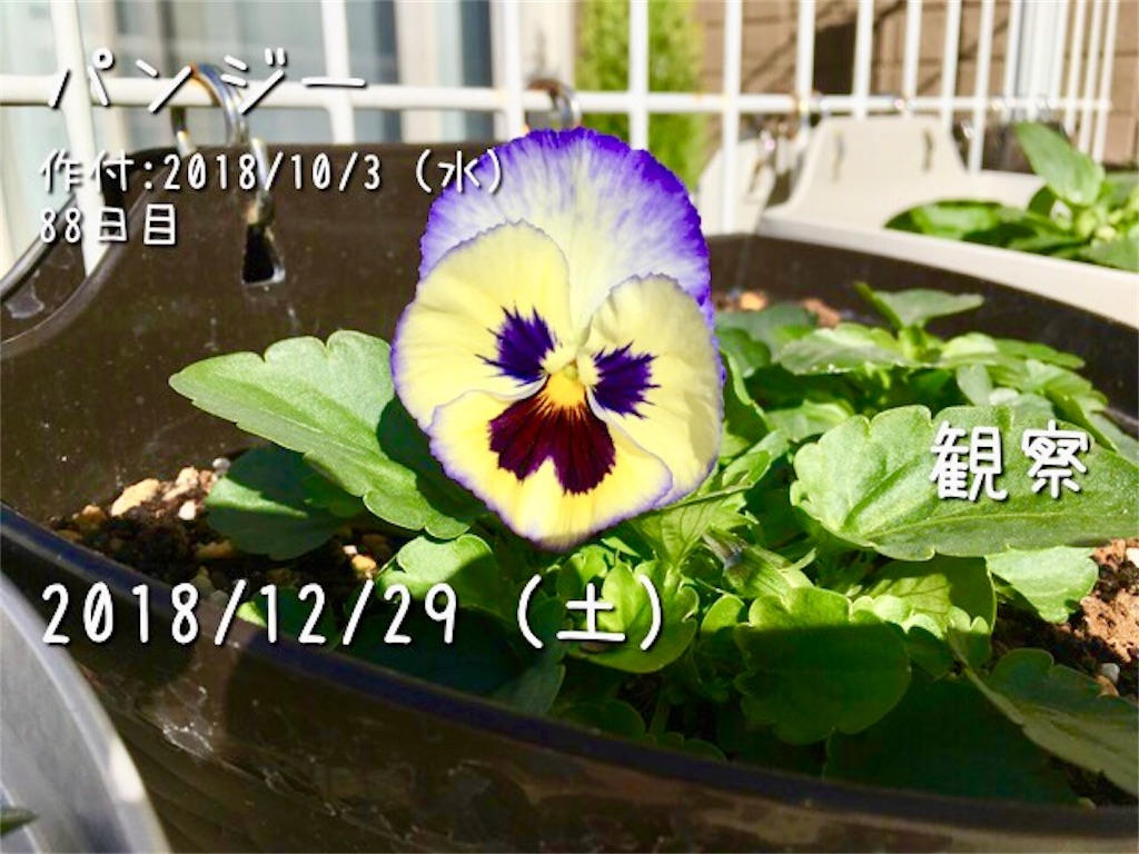 f:id:Mt_vegetable:20181229113750j:image