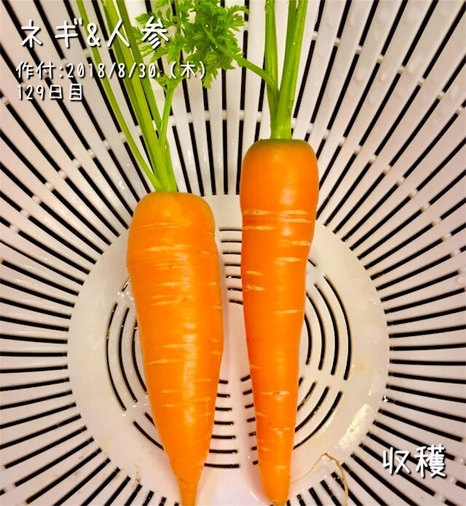 f:id:Mt_vegetable:20190106120819j:image