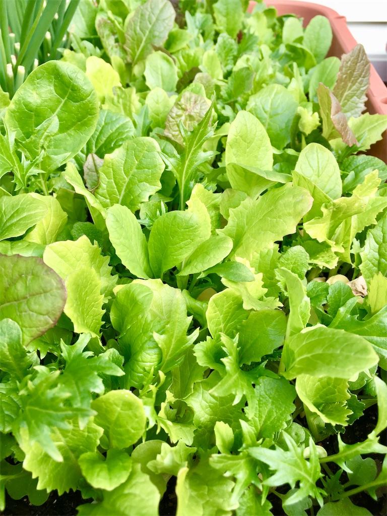f:id:Mt_vegetable:20190106164121j:image
