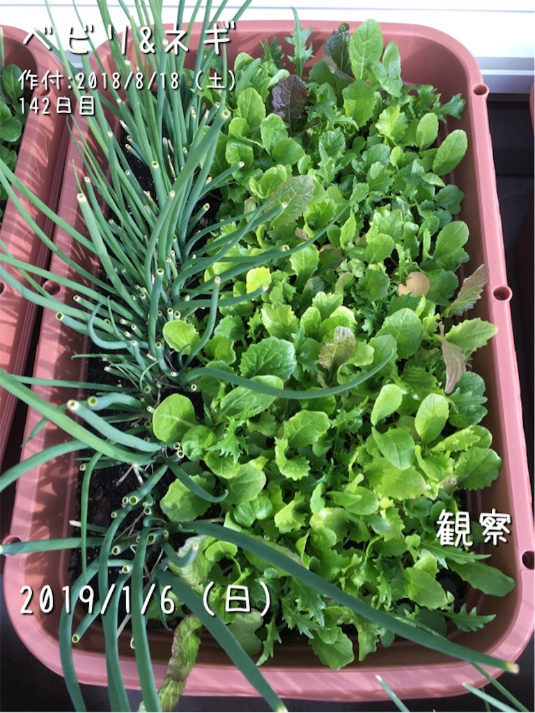 f:id:Mt_vegetable:20190107101740j:image
