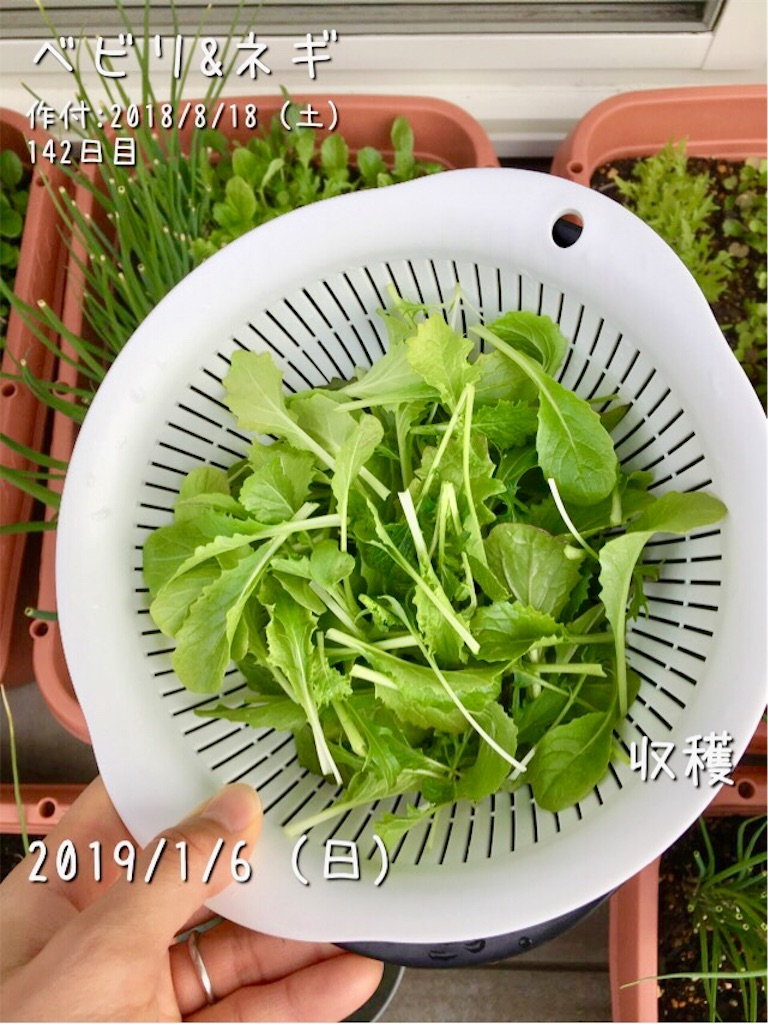 f:id:Mt_vegetable:20190107101757j:image