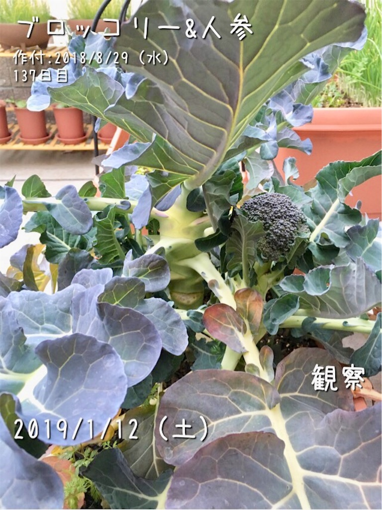 f:id:Mt_vegetable:20190112082356j:image