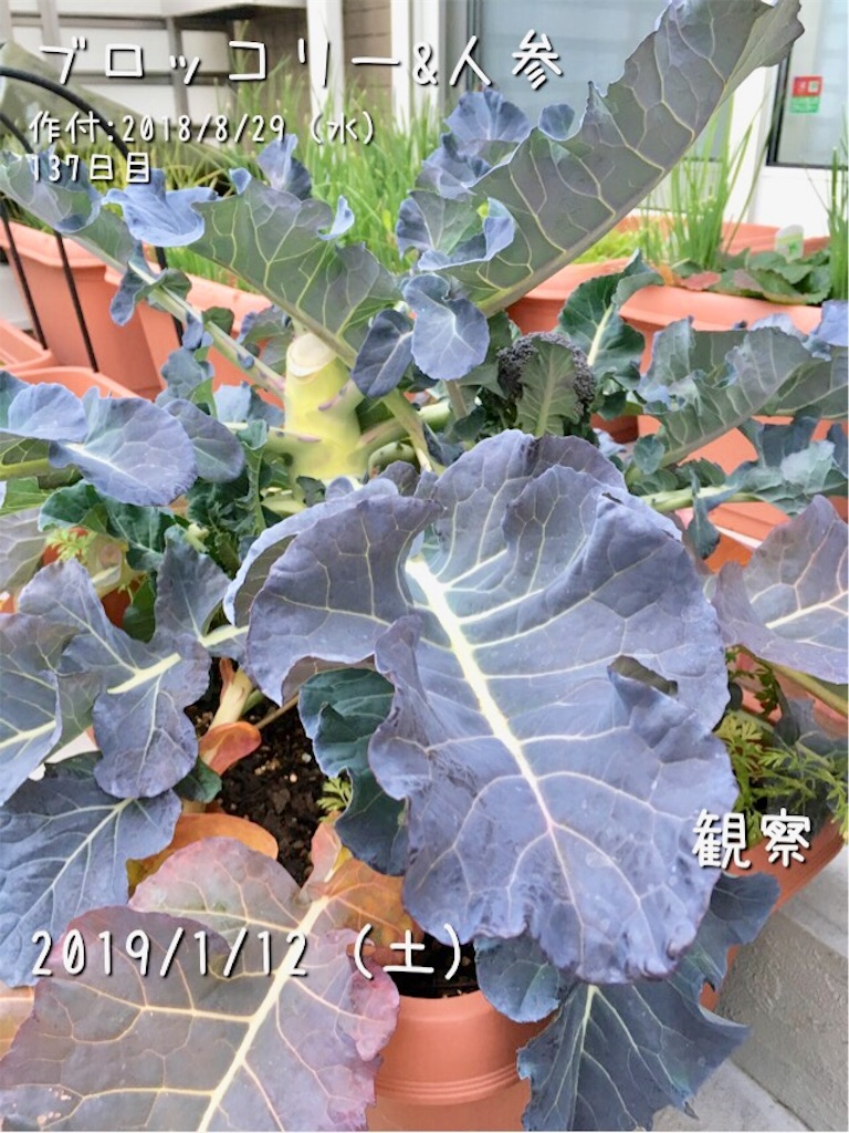 f:id:Mt_vegetable:20190112082400j:image