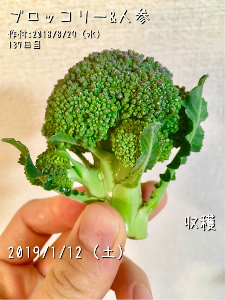 f:id:Mt_vegetable:20190112234427j:image