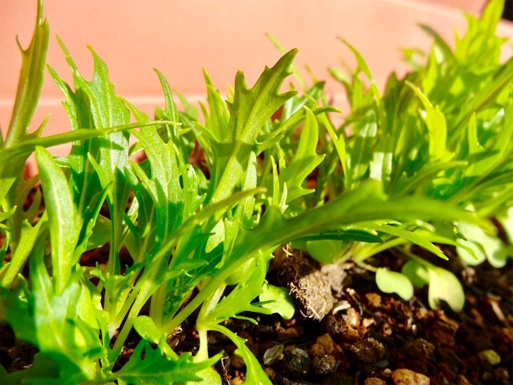 f:id:Mt_vegetable:20190113180416j:image