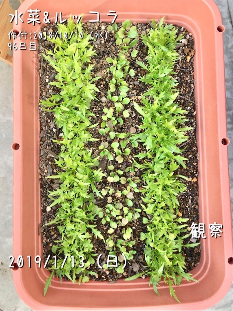 f:id:Mt_vegetable:20190113180435j:image