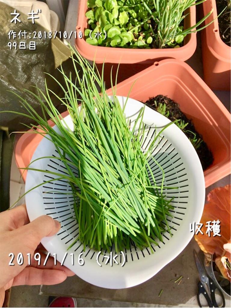 f:id:Mt_vegetable:20190116134736j:image