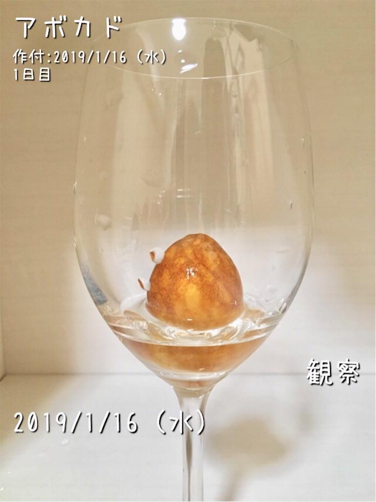 f:id:Mt_vegetable:20190117064031j:image