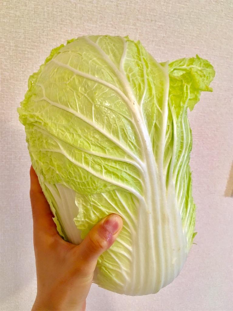 f:id:Mt_vegetable:20190120215100j:image