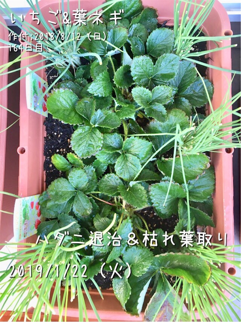 f:id:Mt_vegetable:20190122202855j:image