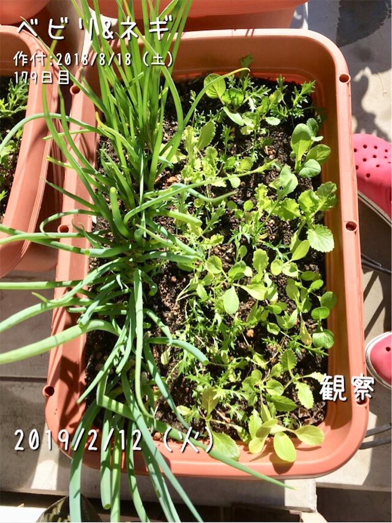f:id:Mt_vegetable:20190212120647j:image
