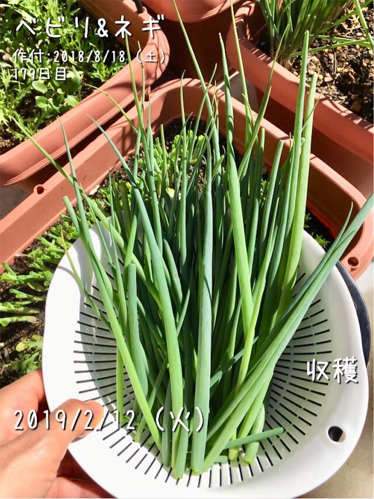 f:id:Mt_vegetable:20190212120651j:image