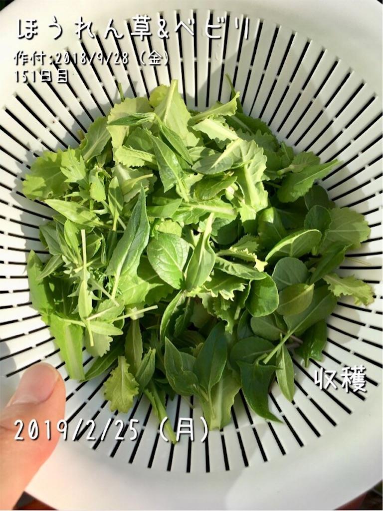 f:id:Mt_vegetable:20190225190716j:image