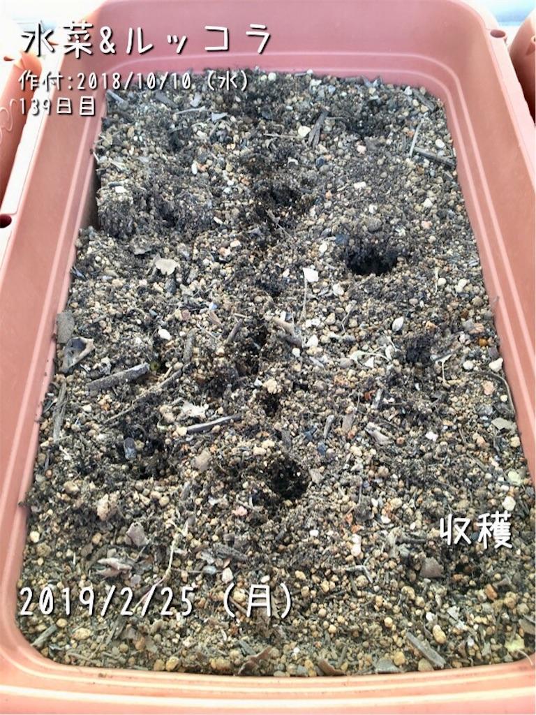 f:id:Mt_vegetable:20190225190735j:image