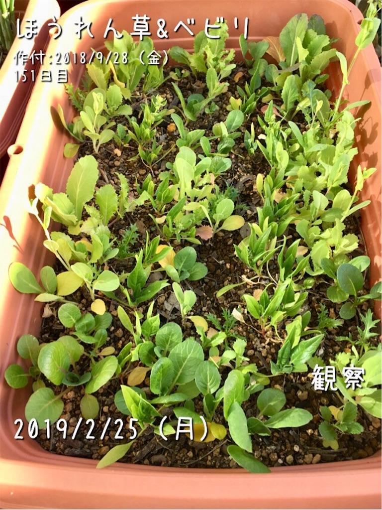 f:id:Mt_vegetable:20190225190923j:image