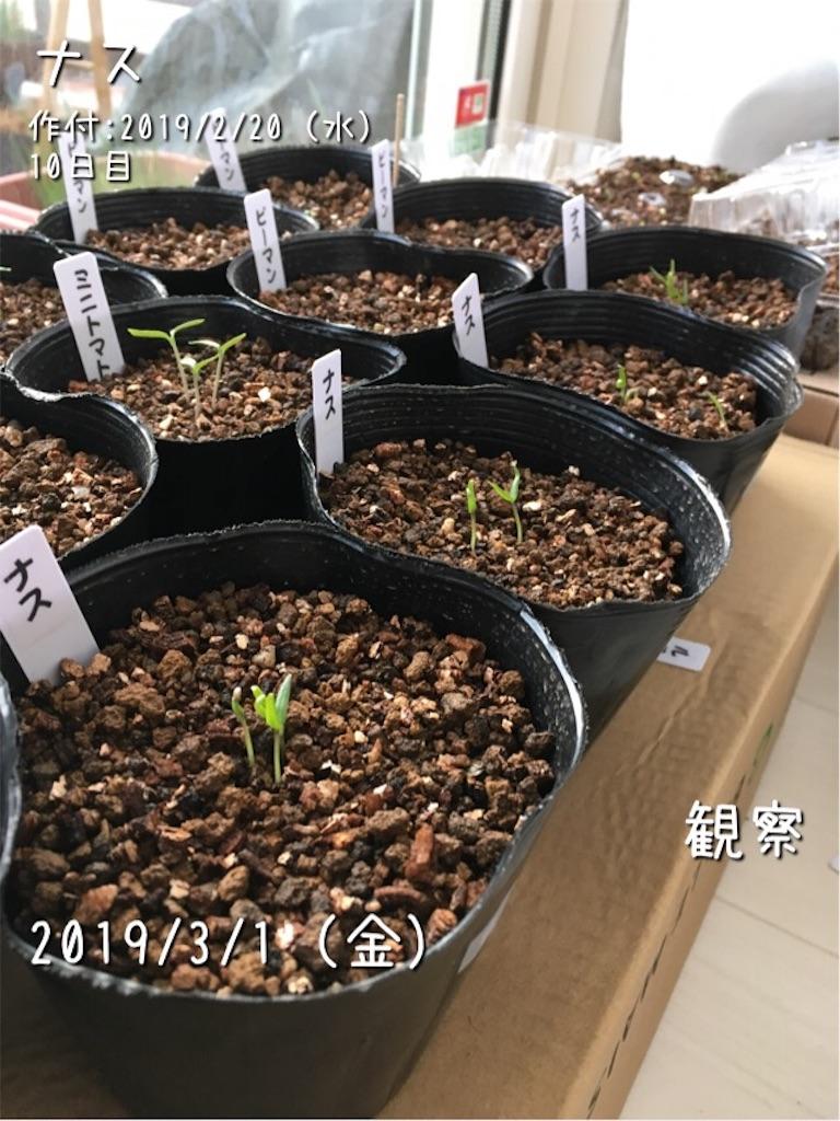 f:id:Mt_vegetable:20190301205549j:image