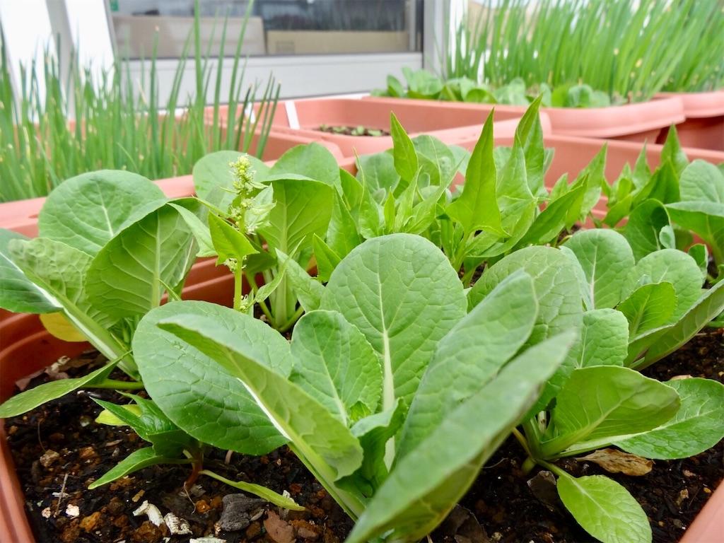 f:id:Mt_vegetable:20190306201036j:image