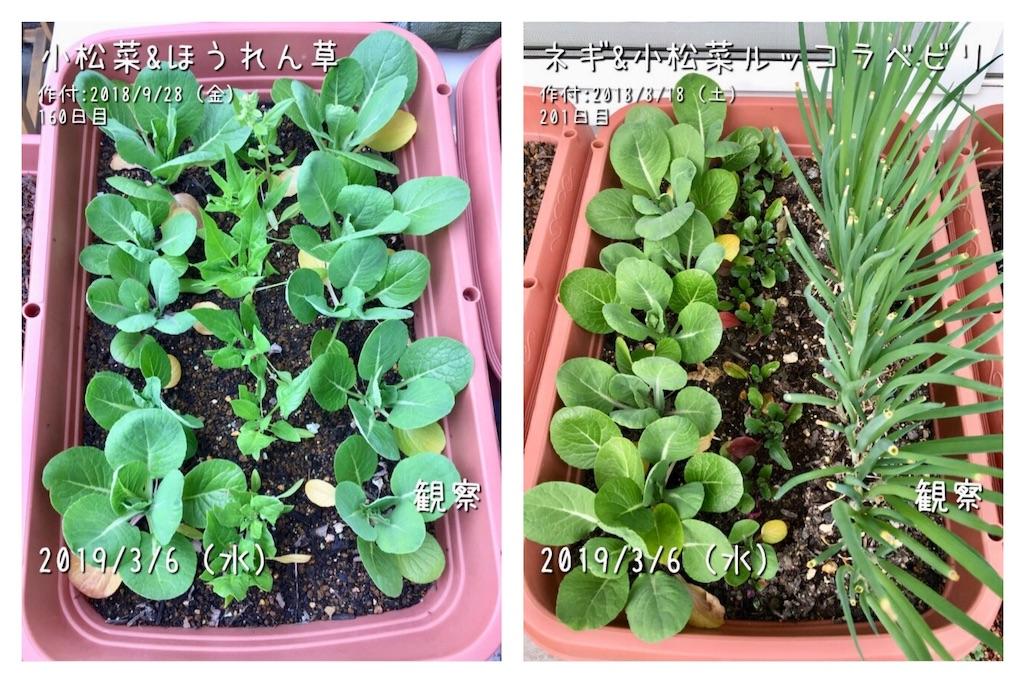 f:id:Mt_vegetable:20190306201053j:image