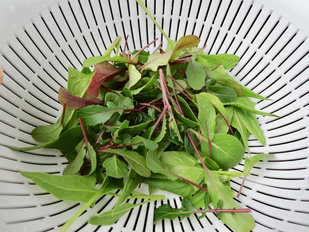 f:id:Mt_vegetable:20190306201100j:image