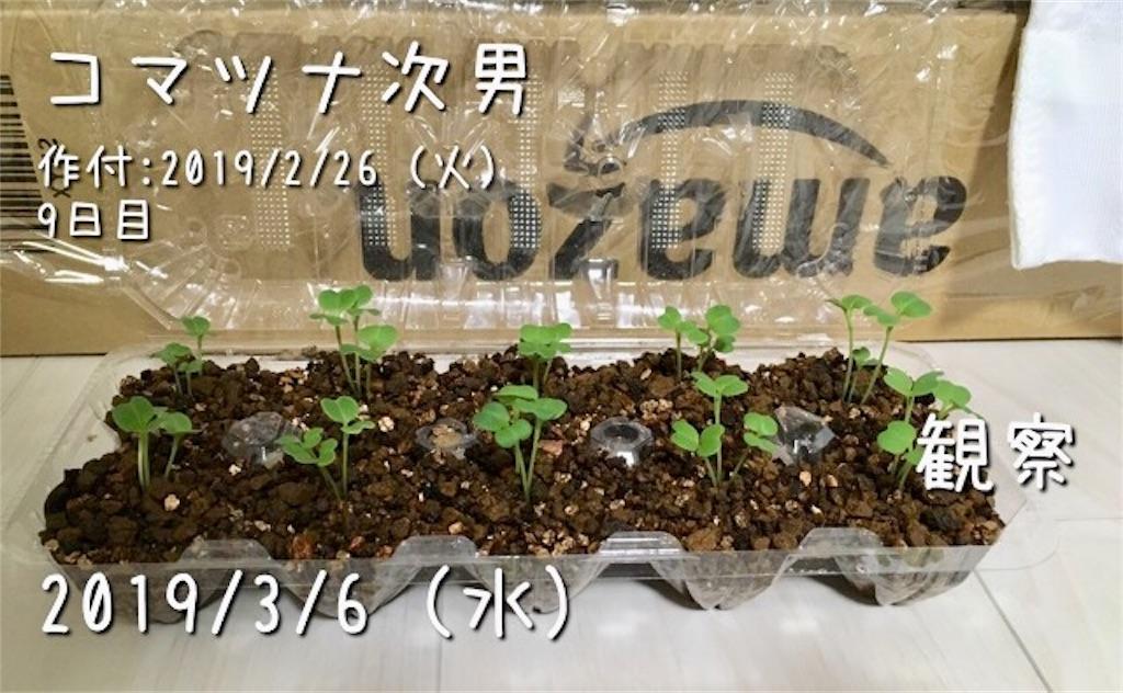 f:id:Mt_vegetable:20190306210238j:image