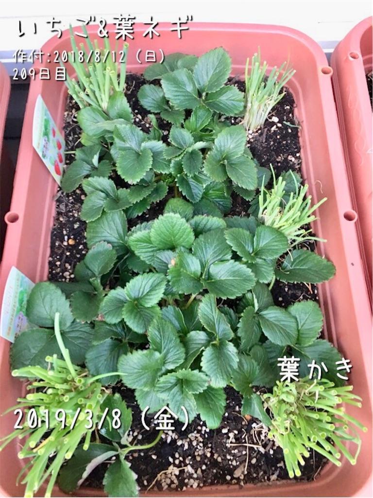 f:id:Mt_vegetable:20190308195801j:image