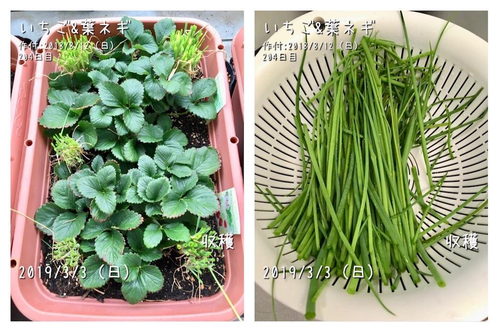 f:id:Mt_vegetable:20190308235102j:image