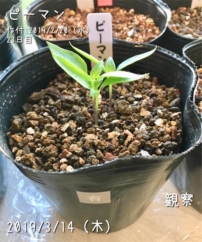 f:id:Mt_vegetable:20190314080617j:image