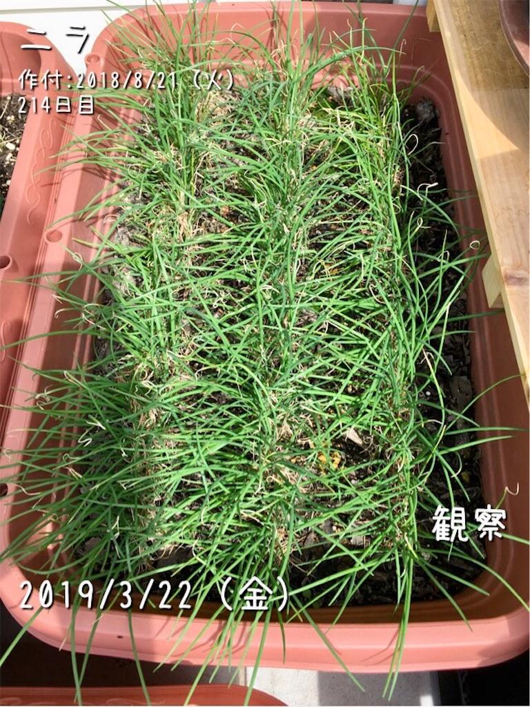 f:id:Mt_vegetable:20190323010142j:image