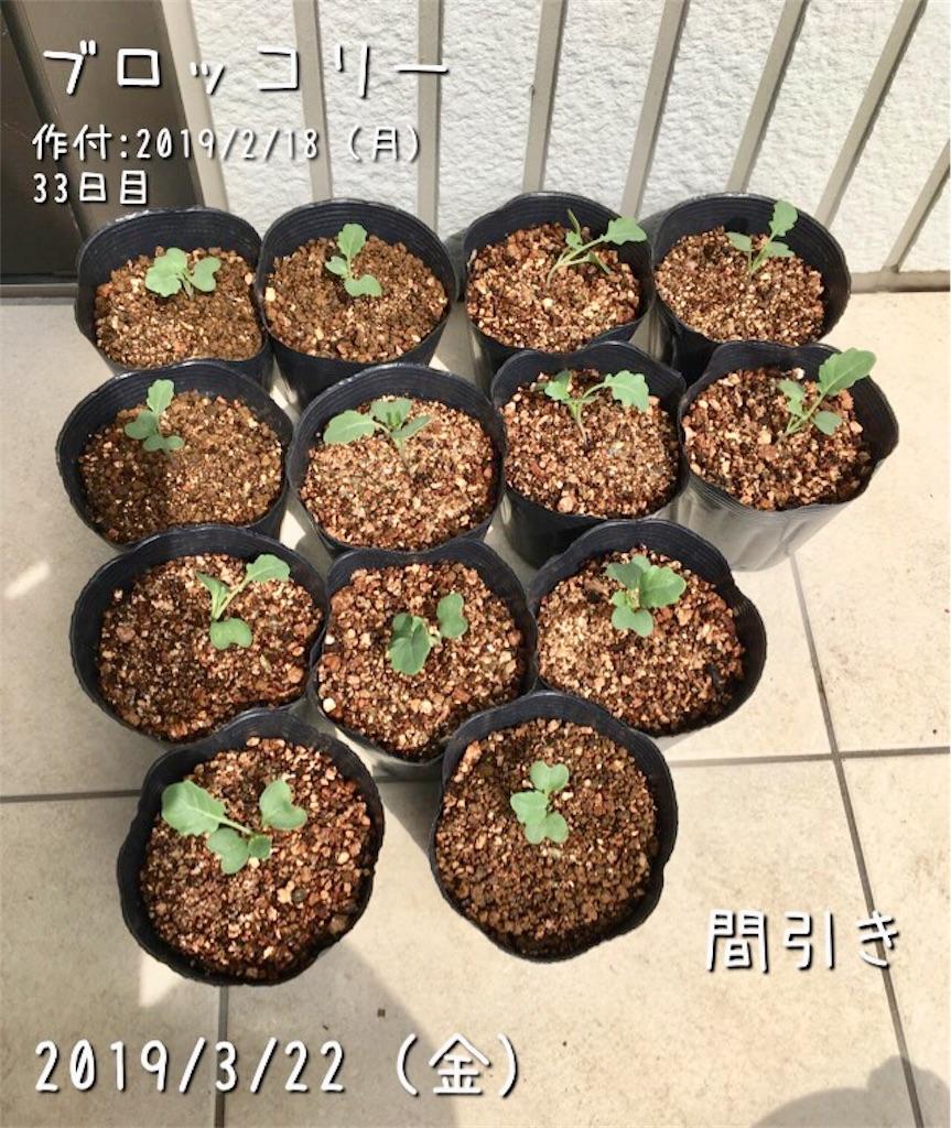 f:id:Mt_vegetable:20190324051339j:image