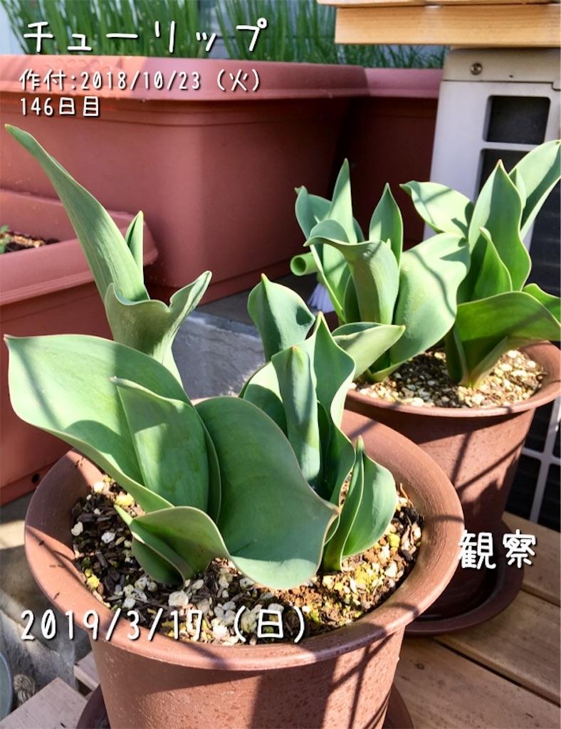 f:id:Mt_vegetable:20190324052520j:image