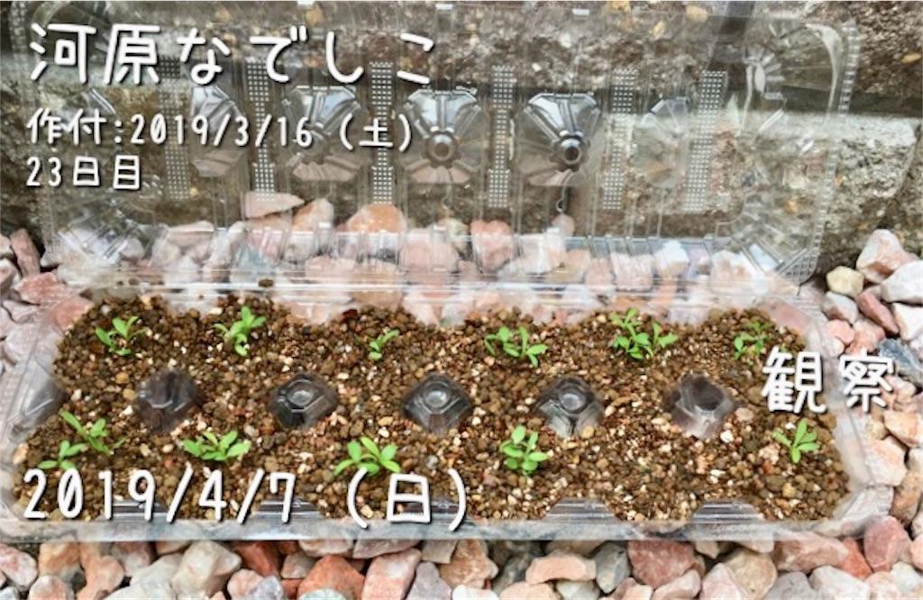 f:id:Mt_vegetable:20190407142514j:image