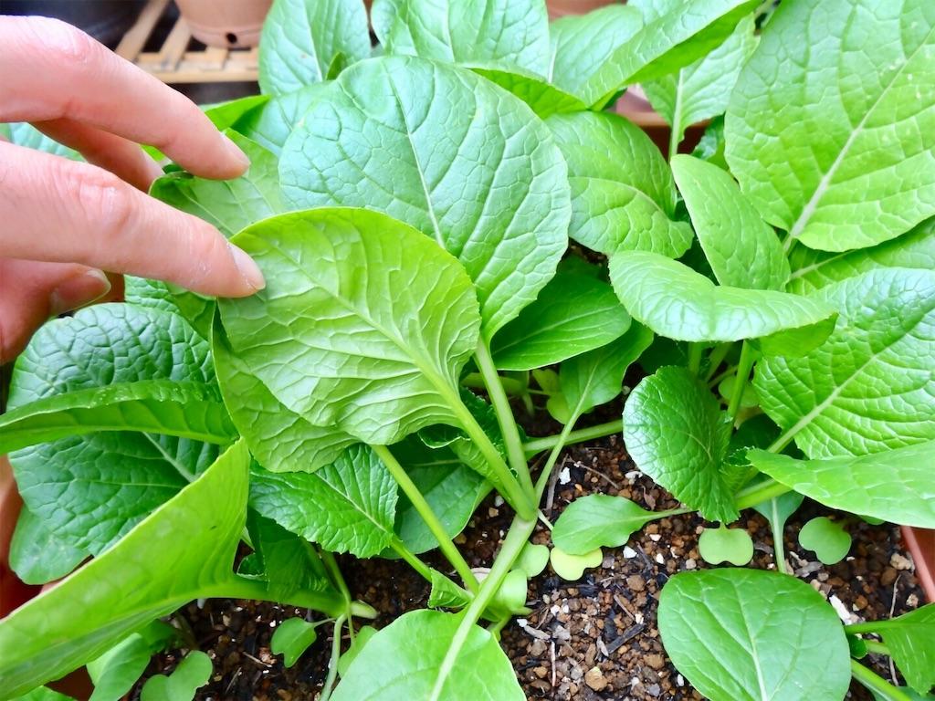 f:id:Mt_vegetable:20190414185721j:image