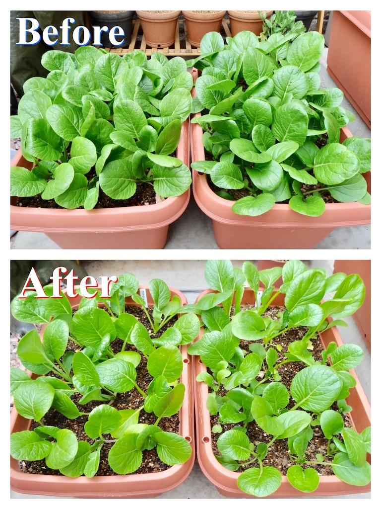 f:id:Mt_vegetable:20190414185742j:image