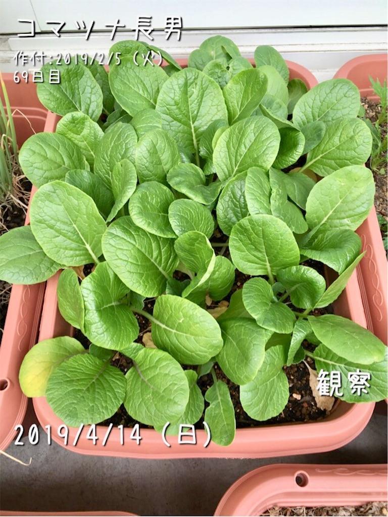 f:id:Mt_vegetable:20190414185751j:image