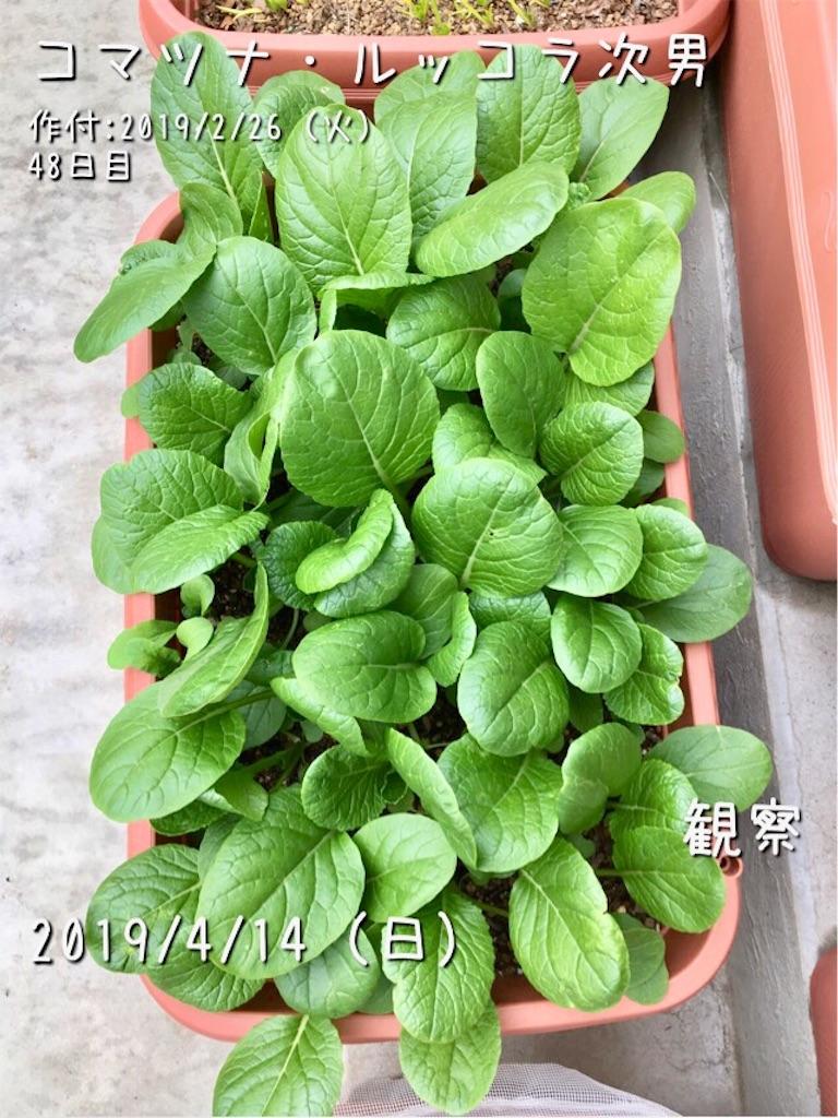 f:id:Mt_vegetable:20190414185802j:image