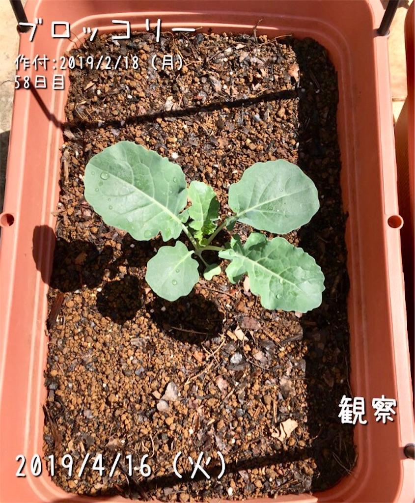 f:id:Mt_vegetable:20190416174155j:image