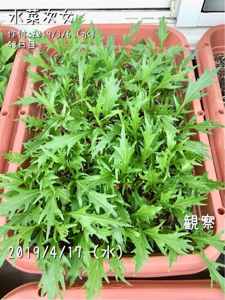 f:id:Mt_vegetable:20190417173020j:image