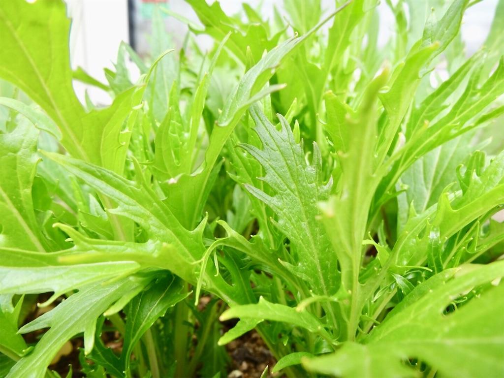 f:id:Mt_vegetable:20190417173130j:image