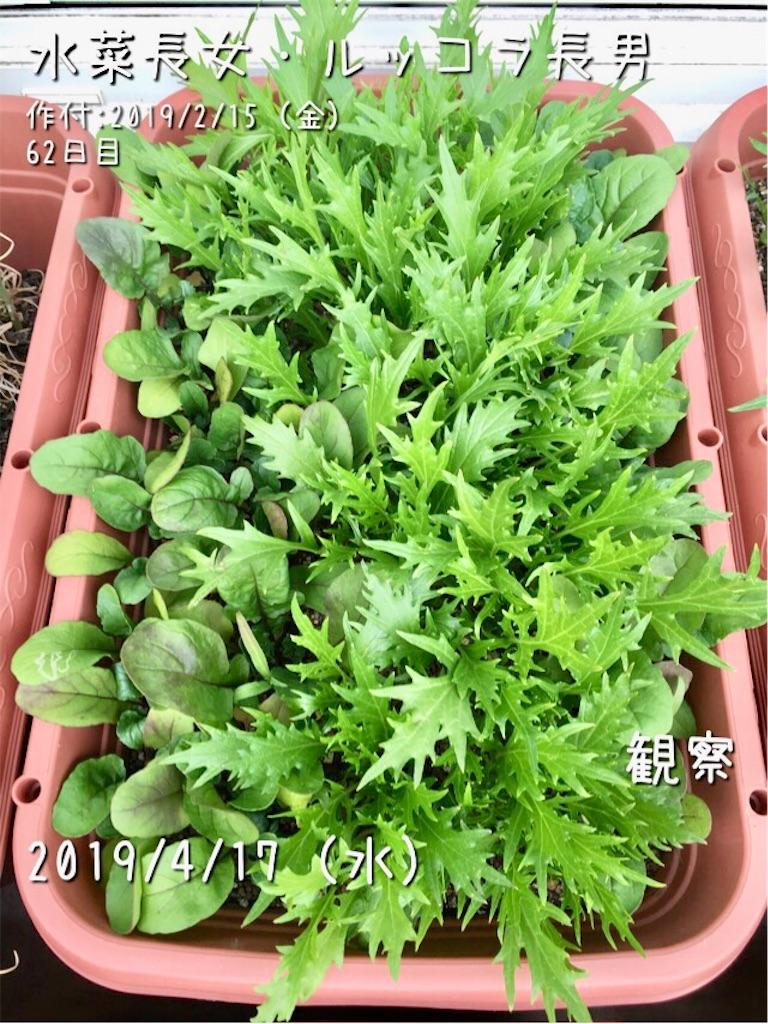 f:id:Mt_vegetable:20190417173141j:image